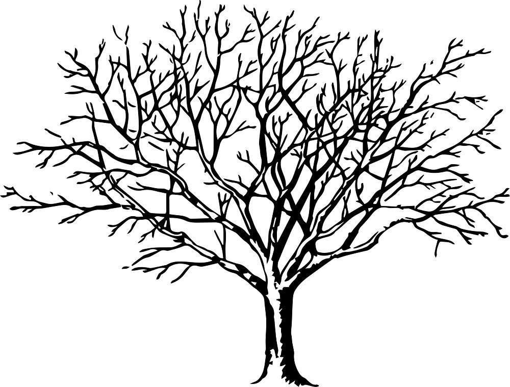 2019 Genealogy Talks with Susie Zada